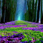 Forest Purple Flowers Spring Nature Hd Wallpaper Nature Spring Facebook Cover 1920x1080 Download Hd Wallpaper Wallpapertip