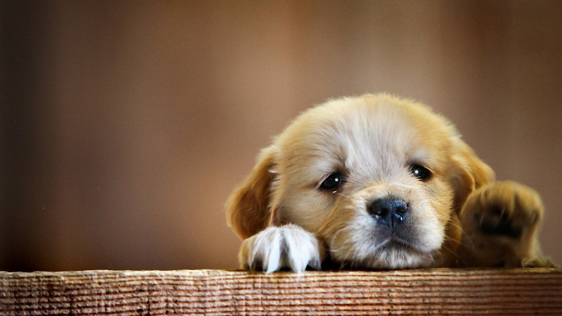 cute baby dog wallpaper (11 wallpapers) – hd wallpapers