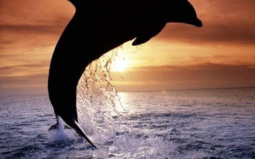 Прыжок дельфина обои, скачать картинки на рабочий стол ...