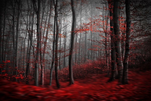 Red Carpet Forest Wall Mural | Wallsauce USA