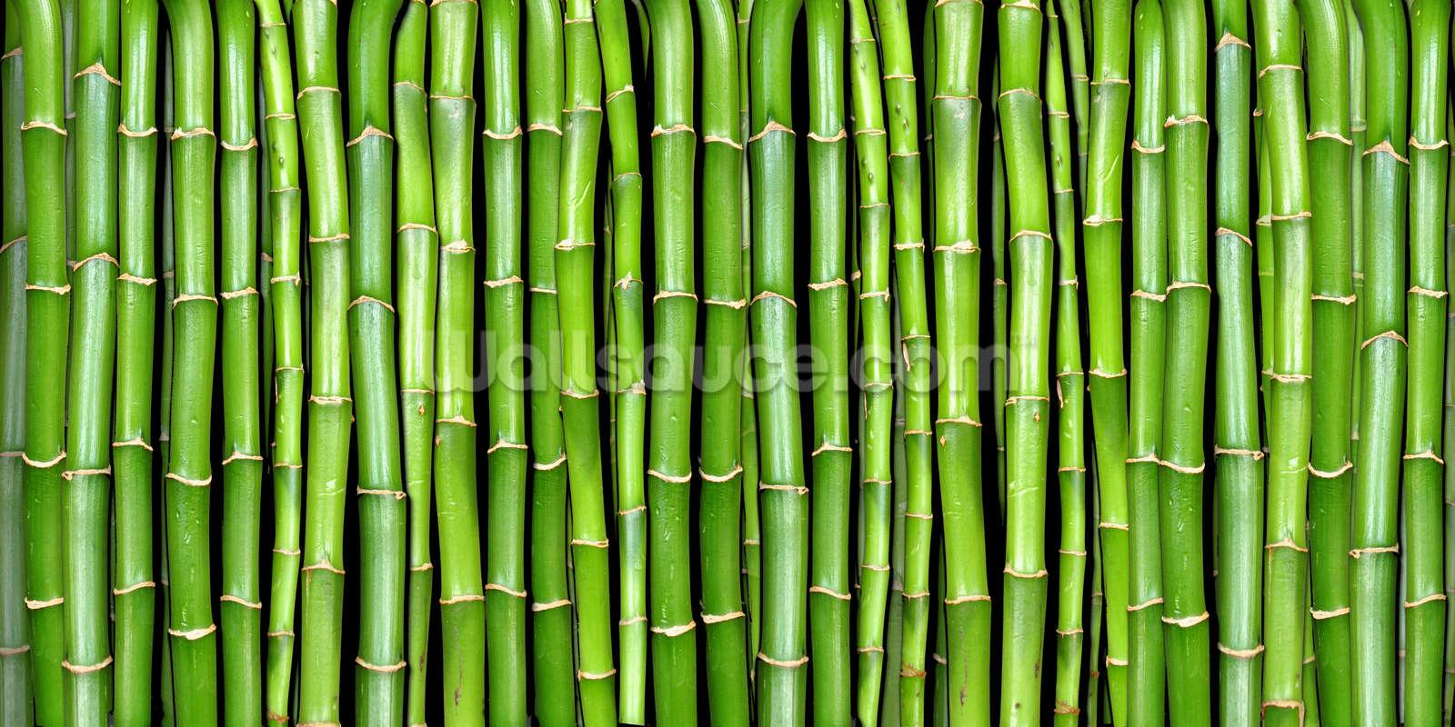 Bamboo Wallpaper Mural Wallsauce AU