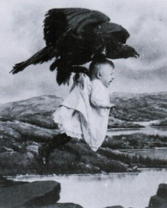 Don't worry, the crows are unlikely to carry off your small child.