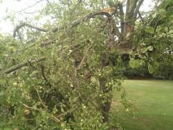AP 20 broken branch Aug 14