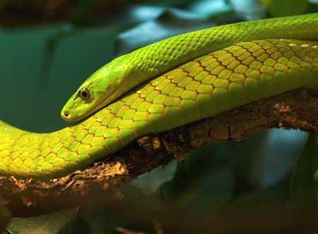 serpente.jpg