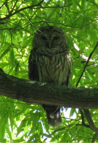 What Animals Eat Dogwood Tree Plant