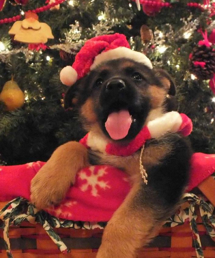 Christmas tree puppies_edited-2