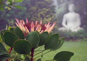 Buddhist Retreat Center garden.