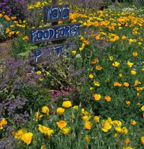 A Noyo Food Forest's edible garden.