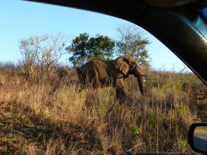 Elephant at Hluhluwe by photojournalist Wanda Hennig