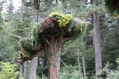 Trees in Glacier Gardens, Juneau, Alaska   wandasknottythoughts.com