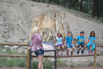 The Big Stump at Florissant Fossil Beds National Monument, Colorado on wandasknottythoughts.com