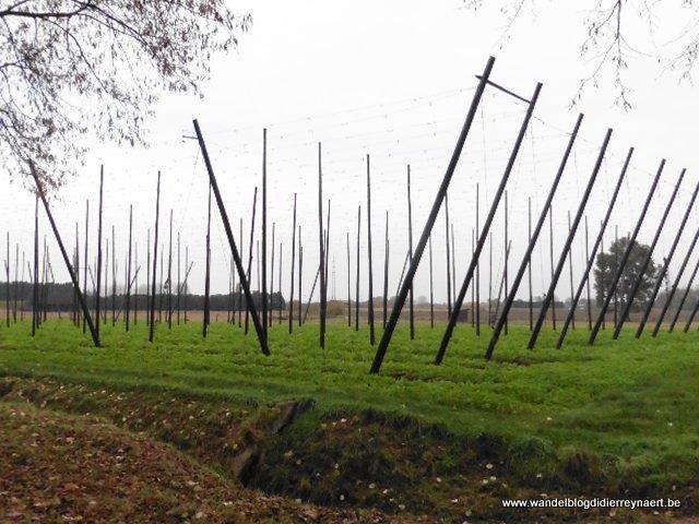 Hoppeveld in Steenhuffel