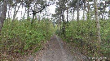de Varkensbaan tussen Steensel en Knegsel