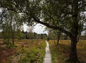 Auf Holzstegen durch das Hochmoor