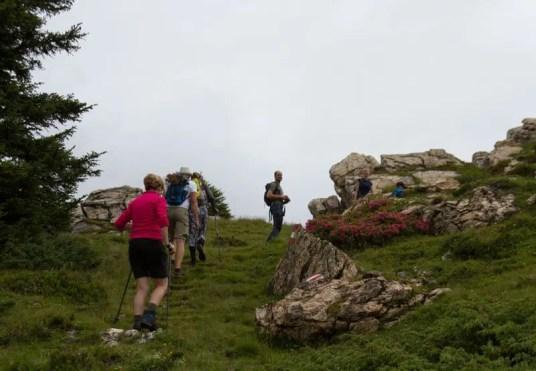 Sportlicher Aufstieg zum Gipfelkreuz auf dem Penkkopf, umgeben von blühenden Alpenrosen.