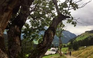 Abstieg zur Breitenebenalm