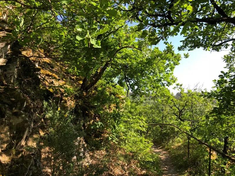 Abstieg nach Bad Bertrich