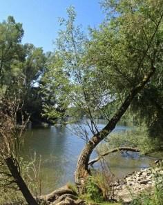 Romantische Rheinauen