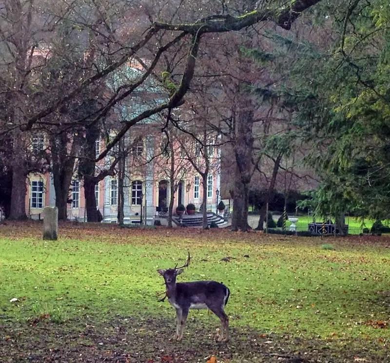 Damhirsch im Park vor Schloss Assumstadt