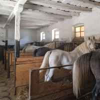 Visiting the Romanian National Horse Farm: European Equine Tourism