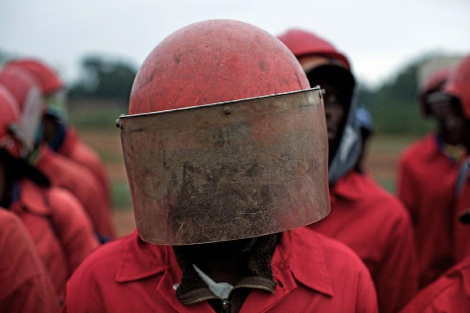 Hormigas rojas | © James Oatway