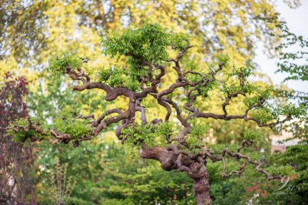 botanische tuin leuven