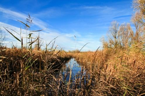 Lauwersmeer Wandeling-13