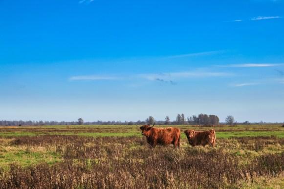 Lauwersmeer Wandeling-14
