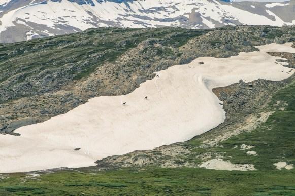 Canada - Eenvoudige hikes - Wilcox Pass-7
