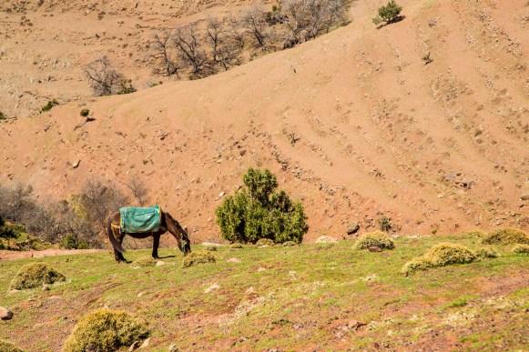 Marokko - Dag 3-21