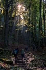 Mullerthal Trail-15