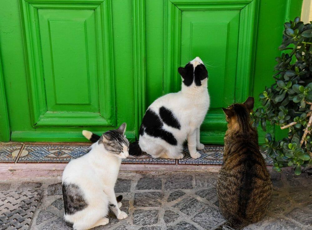 Crete kitties