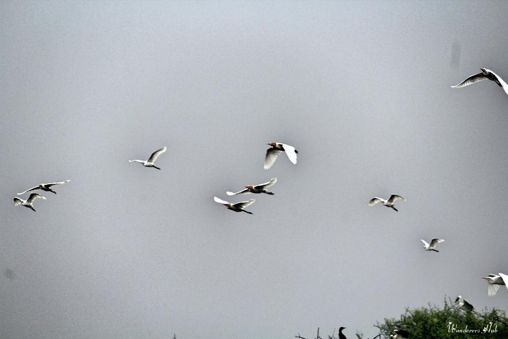 Bharatpur Bird Park
