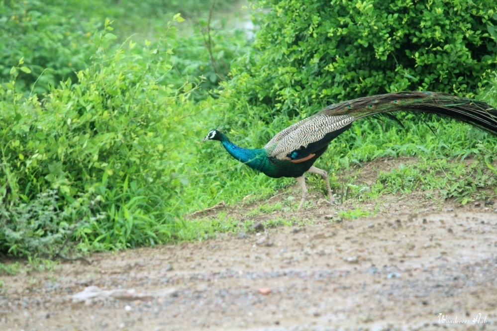 the Bharatpur national park