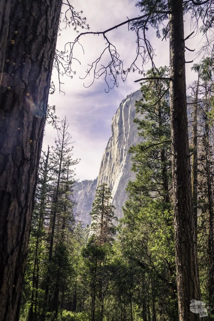 El Capitan is the jewel of the east end of the Yosemite Valley Loop Trail.