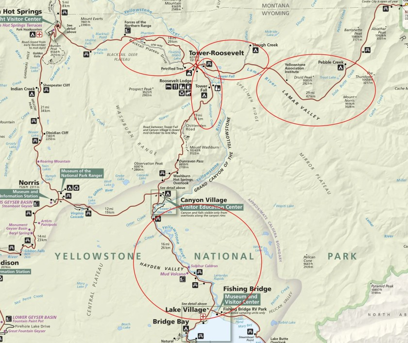 Our best areas for spotting wildlife in Yellowstone National Park