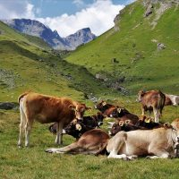 Ein alter Brauch in den Alpen - der Bätruef