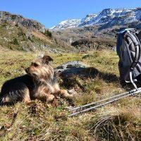 Gemeinsam wandern - zuverlässige Wanderkollegen immer willkommen!