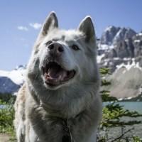 Hundewanderung – so haben Mensch und Tier zusammen Spass