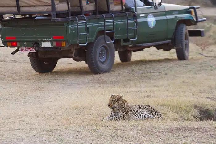 Leopard voiture