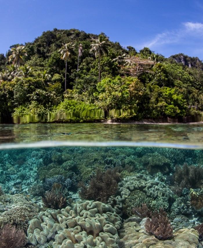 Indonezja: Nurkowanie na Raja Ampat