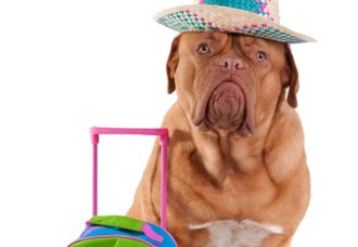 moving overseas with a dog: international pet travel