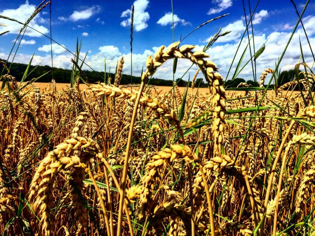 Munich Biking Wheat Field