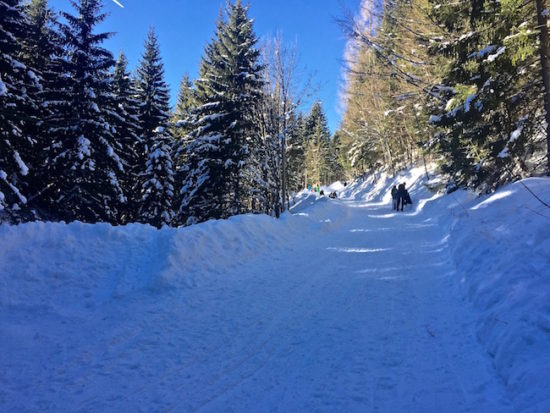 Day Trip from Munich Sledding Spitzingsee