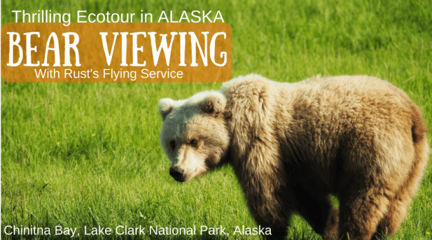 Alaska-Brown-Bear-Viewing-Ecotour-wildlife-Chinitna-Bay-Lake-Clark-National-Park