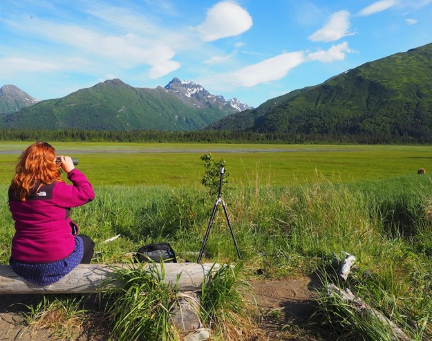 wandering-chocobo-bear-viewing-ecotour-alaska