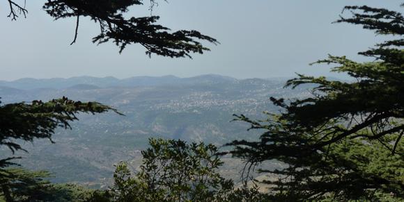 Cedar Trees, Lebanon