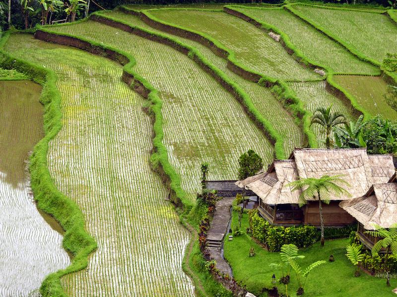 The island of Bali, Indonesia - beautiful
