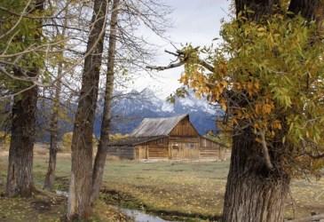homestead business plan