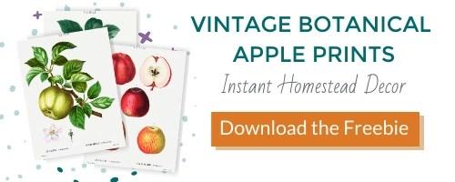 vintage botanical apple prints